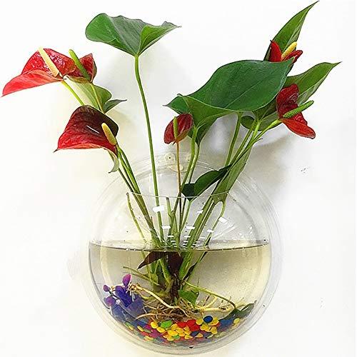 Homeofying Creative Blumentopfvase für Aquarien, zur Wandmontage, Acryl, transparent, acryl, durchsichtig, 15 cm (Mexikanische Blumentöpfe)