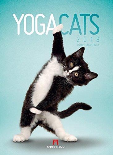 Yoga Cats 2018