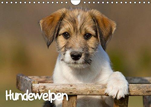 Hundewelpen (Wandkalender 2019 DIN A4 quer)