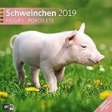 Schweinchen 2019, Wandkalender / Broschürenkalender im Hochformat (aufgeklappt 30x60 cm) - Geschenk-Kalender mit Monatskalendarium zum Eintragen