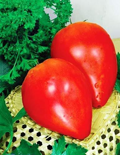 Shoopy Star Graines ancolie Terry Mix extérieur Fleur vivace Jardin Cut Ukraine bio
