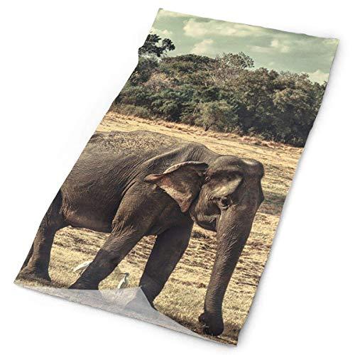 Bikofhd Diademas Elefantes Familia Headwear Bandana Sweatband Gaiter Head Wrap Mascarilla Cuello...