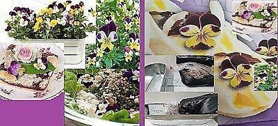 1x Essbare Veilchen Salat Dekoration Garten Blume Pflanze Neu K-P283 (Dekorationen Blumen Essbare)