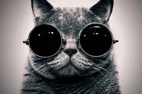 Leinwandbild, Motiv: Oremovqweenry, 61 x 91,4 cm, ungerahmter Kunstdruck, Katze mit Sonnenbrille, Kunstdruck auf Leinwand, Wanddekoration Poster