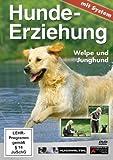 Hundeerziehung mit System: Welpe und Junghund