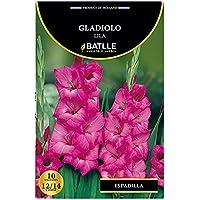 Bulbos - Gladiolo lila - Batlle