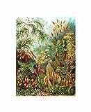 72nd Plate Ernst Haeckel Kunstformen Der Natur Muscinae Poster Print