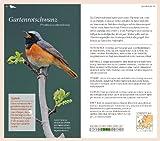 Gartenvögel: Die wichtigsten Arten entdecken und bestimmen - 5