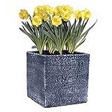 Hetoco Cemento fioriera Quadrata succulenti Cactus, pianta contenitori vasi di Fiori davanzale Vaso, m
