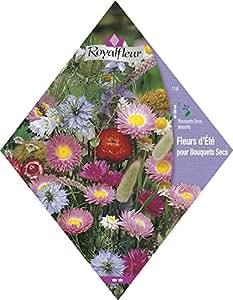 Royalfleur PFRV00118 Graines de Fleurs d'Été pour Bouquets Secs