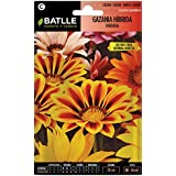 Semillas de Flores - Gazania híbrida splendens variada - Batlle