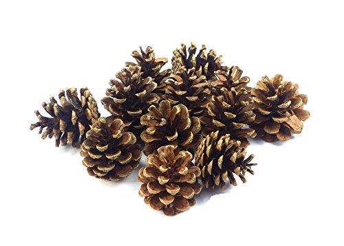 Sepkina 12 Tannenzapfen ca. 5-6cm Schwarzkiefern Zapfen Kiefernzapfen Tanne Naturzapfen Weihnachtsdeko Adventsdeko...