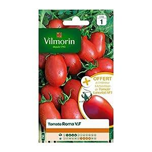 Vilmorin - Roma-Tomaten VF