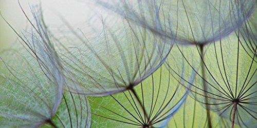 Artland Echt-Glas-Wandbild Deco Glass Anette Linnea Rasmus Pusteblumen-Samen Botanik Blumen Pusteblume Fotografie Grün 50 x 100 x 1,1 cm D1KE 2