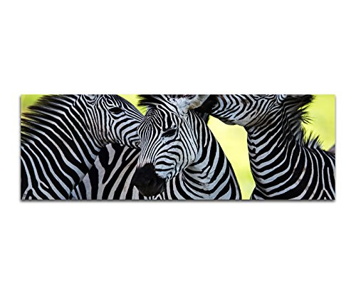 Panoramabild auf Leinwand und Keilrahmen 150x50cm Afrika Zebras Wildnis Safari