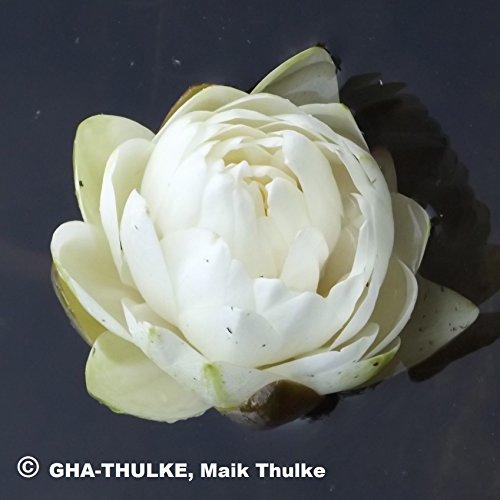 OBI Attraktive Blüte