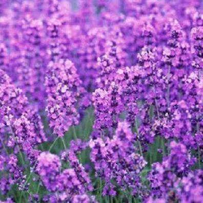 Pinkdose Hot vente 10pcs Couleurs mélangées Pivoine Fleur spéciale Chine Pivoine bricolage jardin maison Livraison gratuite: 14