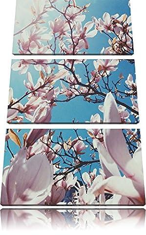 Délicate rose Magnolia Blossoms 3 pièces image de toile l'image 120x80 sur toile, XXL énormes Photos complètement encadrée avec civière, impression d'art sur châssis murale gänstiger comme la peinture ou une peinture à l'huile, pas une affiche ou une