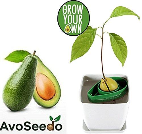 re Garten Geschenke - Pflanzen Sie Ihren eigenen Avocadobaum mit Blumentopf - Kleine Geschenke für Männer und Frauen. Die neue klein Dekoration für ein schöneres zu Hause. Das komplette Pflanz Set (Weiß / Grün) (Neue Dekorationen)