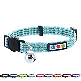 Collars, Leads and Harnesses