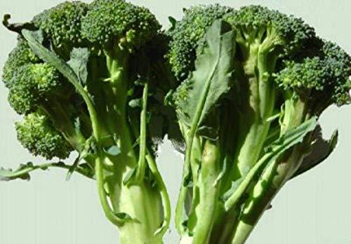 PLAT FIRM Germinazione I semi PLATFIRM-70g Calabrese Broccoli Seeds ~ 20,000ct all\'ingrosso Proteine ~ sopravvivenza Food USA