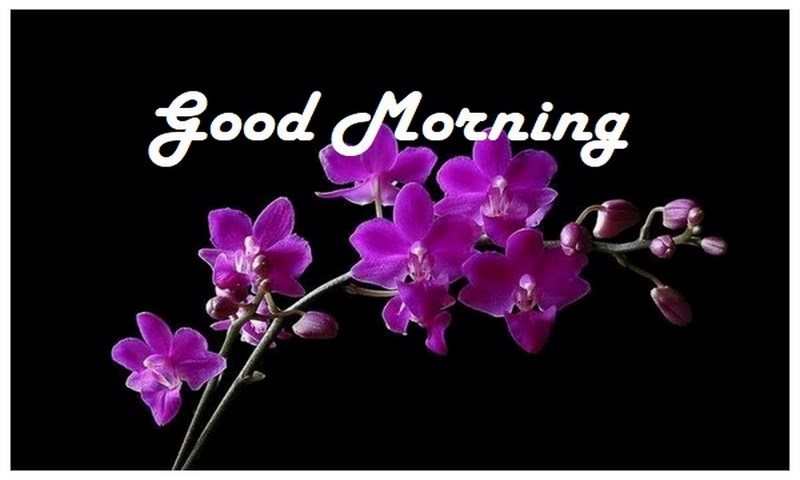 Good Morning Flowers: Amazon co uk: Appstore for Android