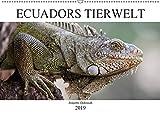 Ecuadors Tierwelt (Wandkalender 2019 DIN A2 quer): Die faszinierende Tierwelt in Ecuador - die schönsten Bilder in einem Kalender (Monatskalender, 14 Seiten ) (CALVENDO Tiere)