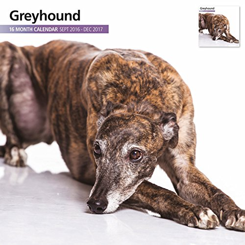 greyhound-16-month-2017-wall-calendar