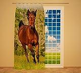 Clever-Kauf-24 Schlaufenschal Vorhang Gardine Pferd auf der Wiese BxH 145 x 245 cm | Sichtschutz | Lichtdurchlässiger Schlaufenvorhang mit Druckmotiv