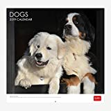 Chiens 2019 Calendrier mural – 30 x 29 cm