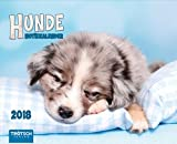 Notiz-Kalender Hunde 2018