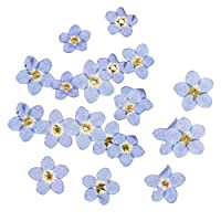 B Baosity 20 Pieces Forget-me-not Dried Flowers Embellishments for DIY Phone Case Decoration Resin Ornament Making