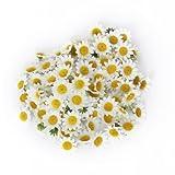 AKORD, Corolle Artificiali di Gerbera/Margherita, per Fai-da-Te o Decorazioni Nuziali, 100 pz, plastica, White, 3.9 x 3.9 x 2 cm