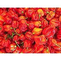 Habanero Red (Eine der schärfsten Chilis der Welt) 10 Samen
