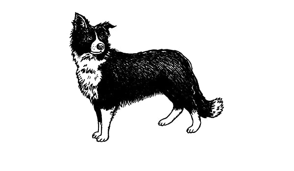 RS00024935 A8 /'Border Collie Sheepdog/' Unmounted Rubber Stamp