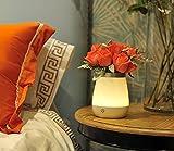 LED Vase von Colleer, Nachttischlampe mit 350 ml Wasser-Kapazität, warmweiße Stehlampe mit USB Wiederaufladbar, dimmbares Stimmungslicht für Schlafzimmer, Küche, Büro, Restaurant, Bar etc