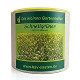Keimsamen Schnellgrüner 250g I Saatgutmischung mit Ölrettich, Weißen Senf, Saatwicken und Buchweizen I Keimsprossen zur Bodenverbesserung I Für 75 m²