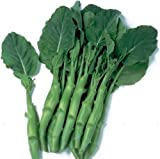 Kailan Kichi - Chinesische Brokkoli - 100 Samen