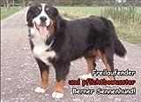INDIGOS UG - Türschild FunSchild - SE302 - ACHTUNG Hund Berner Sennenhund - für Käfig, Zwinger, Haustier, Tür, Tier, Aquarium - DIN A4 PVC 3mm stabil