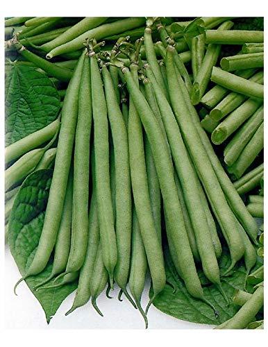 """Grüne BohnenSamen """"Green Slenderette"""" (Packung mit 140)"""