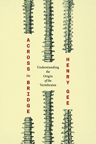 Across the Bridge: Understanding the Origin of the Vertebrates