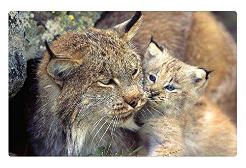 iRocket Fußmatte für den Innenbereich, Lynx Mutter und Baby, 60 x 40 cm - Lynx Outdoor-küchen