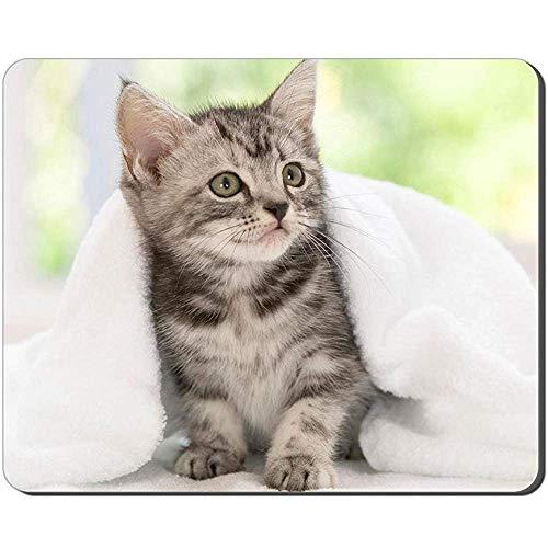Mausepad Amerikanisch Kurzhaar Kätzchen Tier Computerbild Spiel Büro Rutschfeste Mausunterlage 25X30Cm