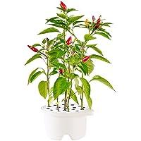 Click & Grow cartucce Refill Peperoncino per