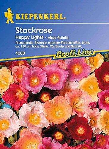 Stockrose Happy Lights
