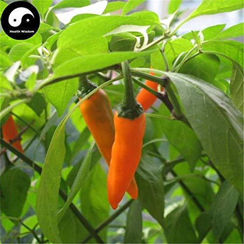 PLAT FIRM KEIM SEEDS: 100pcs: Kaufen Yellow Hot Chili Samen Pflanze Pfeffer Gemüse Super-Chili