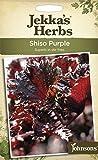Johnsons jekka 's Herbs, Bildhaftes Paket Shiso violett 175 Samen