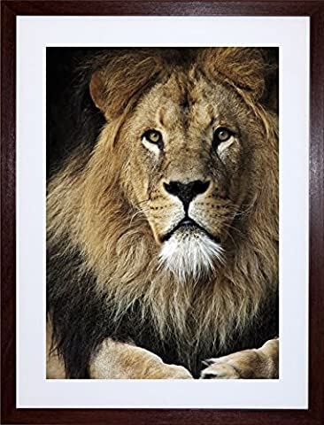 LION MALE FACE ANIMAL CAT PHOTO ART PRINT FRAME WOODEN FRAMED PICTURE POSTER ART MOUNT GIFT F12X486