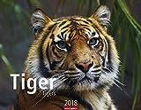 Tiger - Kalender 2018