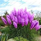 Pinkdose Förderung Mischfarben Pampasgras Pflanze Bonsai Balkon bunt Gras flores beste natürliche Dekoration für Garten 200pcs / bag: 1